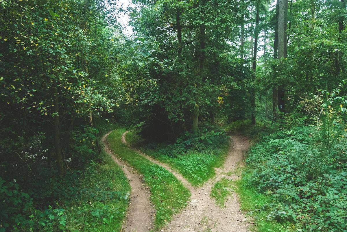 山中の分かれ道